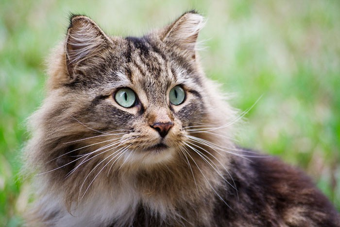 Can Healthy Cats Eat Hills Prescription Urinary Care Food
