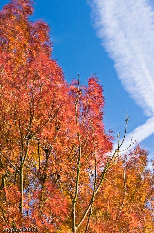 [autumn+(1+of+1).jpg]