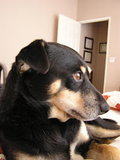 Charlie the grumpy dog