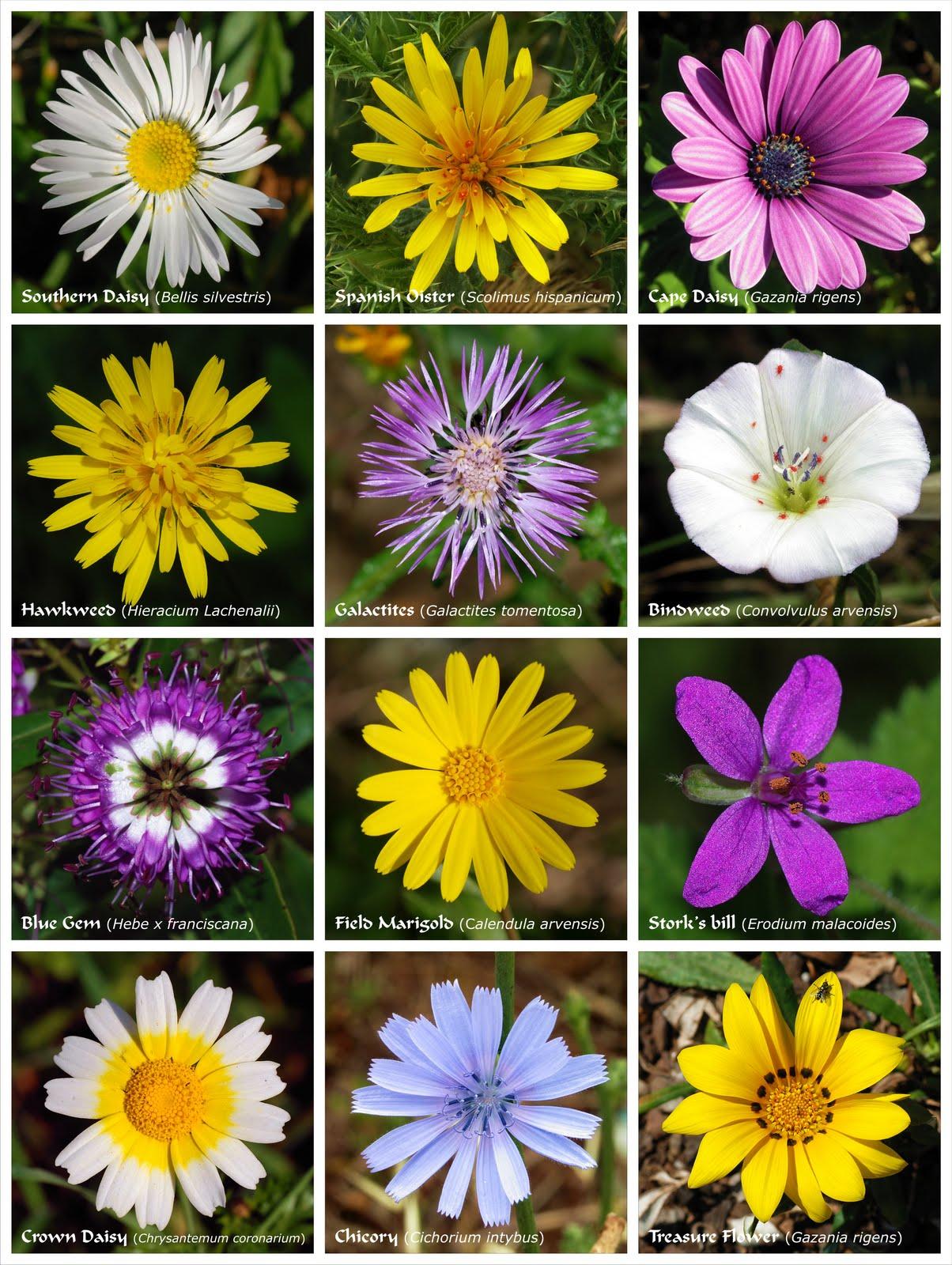 Poderosos colores las flores tienen colores que no les vemos for Catalogo de flores de jardin
