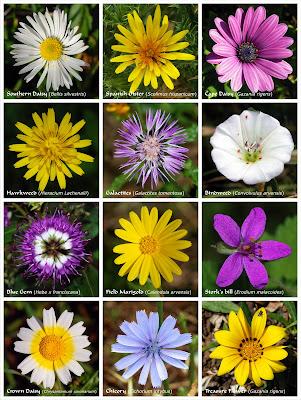 Poderosos colores julio 2009 for Catalogo de flores de jardin