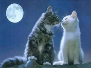 Amantes como gatos  lo dice Joaquin Sabina en \u0026quot; Esta noche contigo\u0026quot;