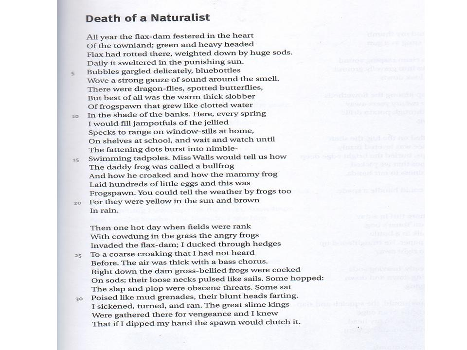 Seamus heaney death of a naturalist essay