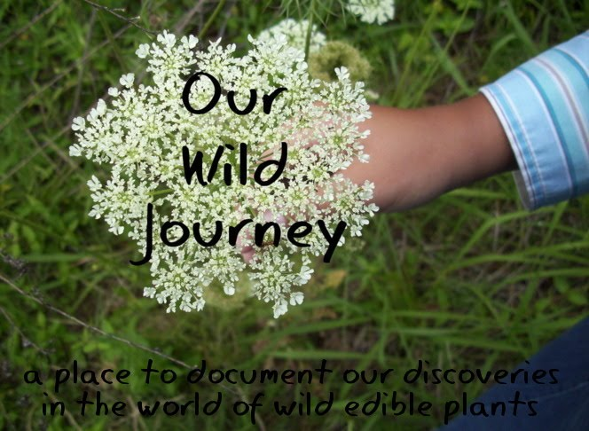 Our Wild Journey