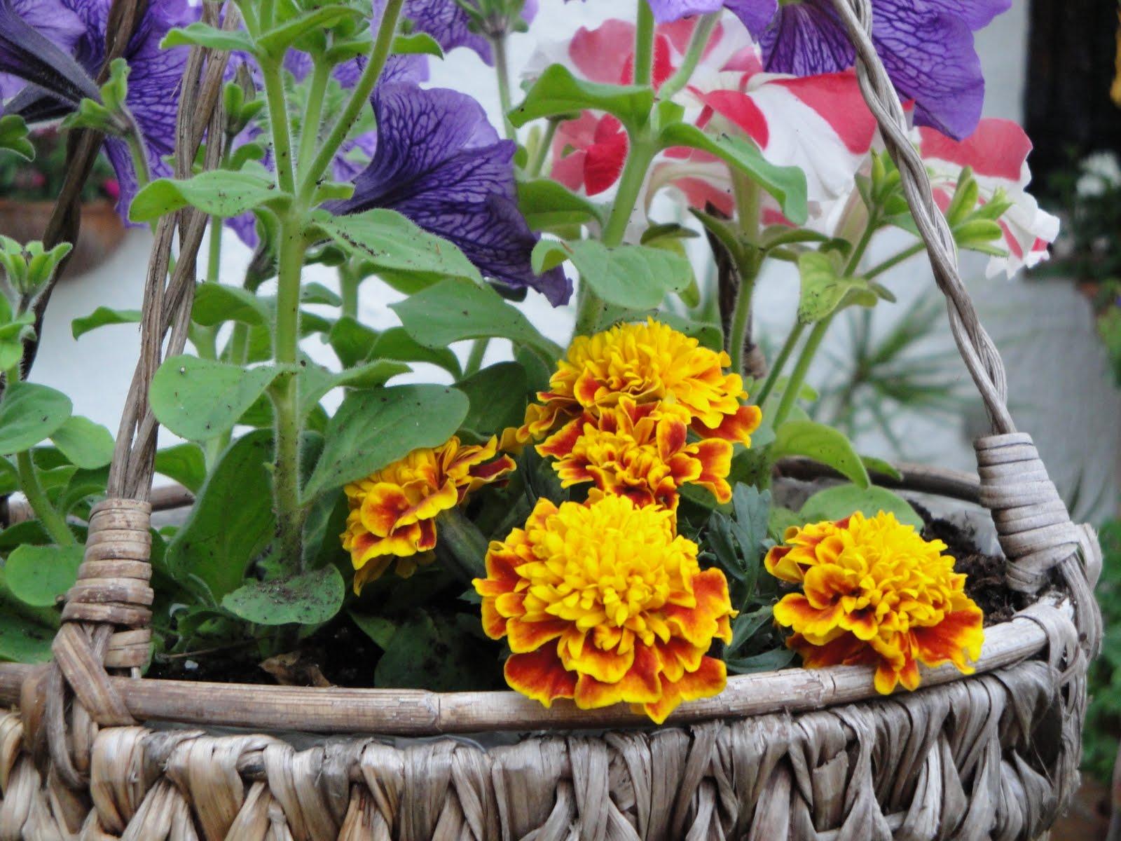 La primavera y las flores caparica memories - Plantas de temporada primavera ...