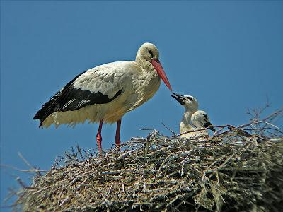 Espectacular este mes de mayo que estamos viviendo en cuanto a aves ...