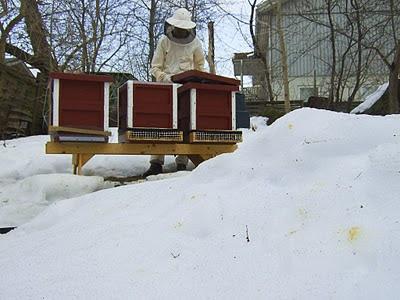 Bajs i snön