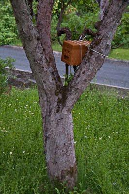 Parningskupa i träd