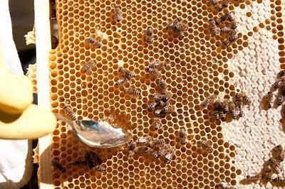 Honung direkt ur bikupan