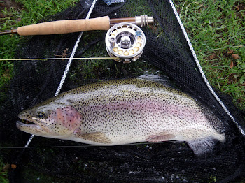 Wild rainbow from the Derbyshire Wye