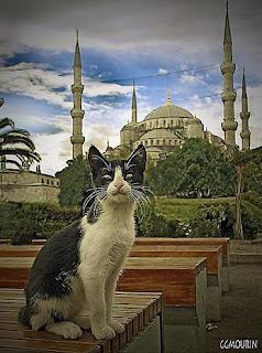 Paseando por la mezquita