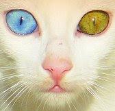 Ojos a lo Bowie