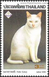 Khoa Manee o Joya Blanca (albino)
