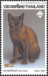 Burmés, gato doméstico por excelencia