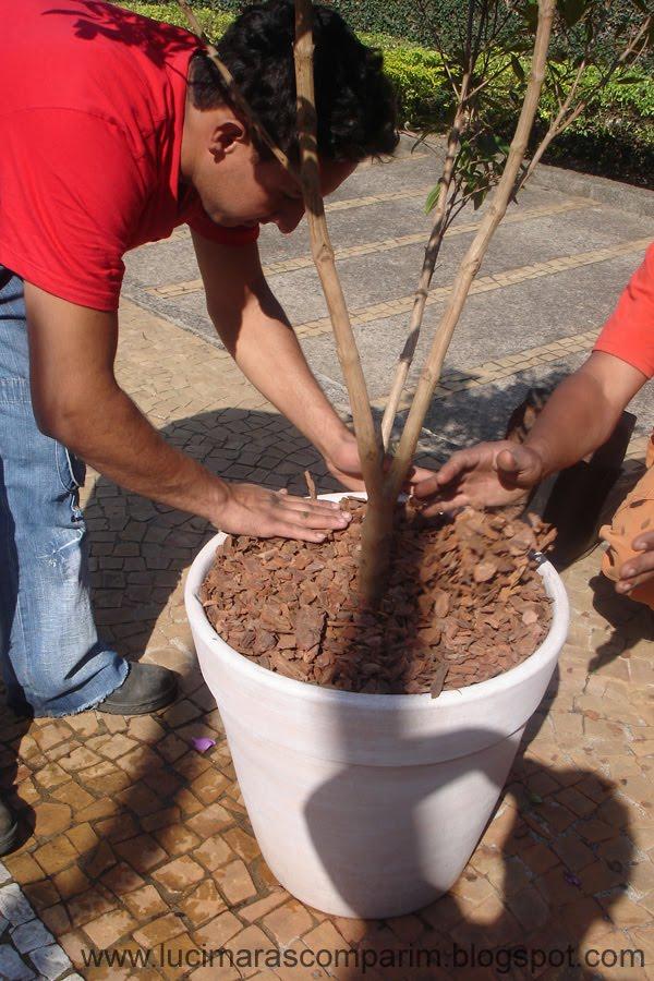 arvore manaca jardim:Para o acabamento, optei por casca de árvore.