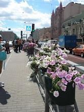 Flores na Nievski