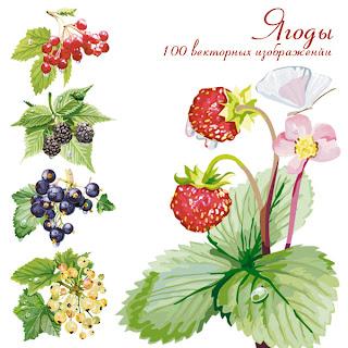 векторный клипарт ягоды
