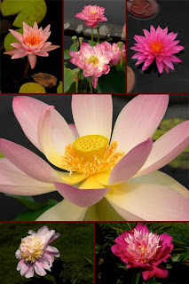 Цветы садовые, цветы дикорастущие, цветы полевые