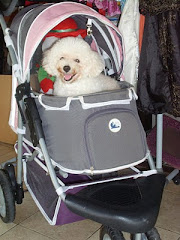 Precious Lady Salsa on her Stroller