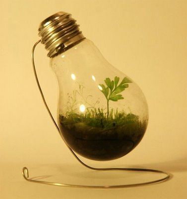 You will need: light bulb terrarium, and water. Add approximately 1 tablespoon to your light bulb terrarium. This should be enough so that the soil is moist, but not too wet. Pour the described amount in and allow it to be absorbed into the soil. Add more if necessary.