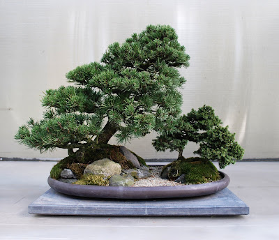 The Pacific Rim Bonsai Collection, Washington State, US