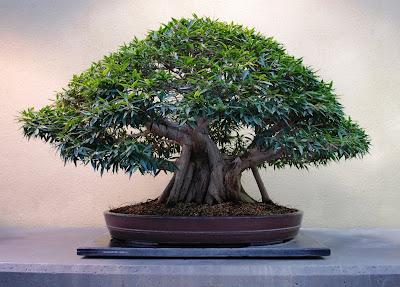 Фото самое маленькое дерево в мире