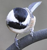[bird.image]