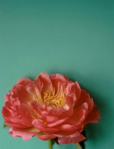 Laissezfaire Colour Inspiration Of The Week