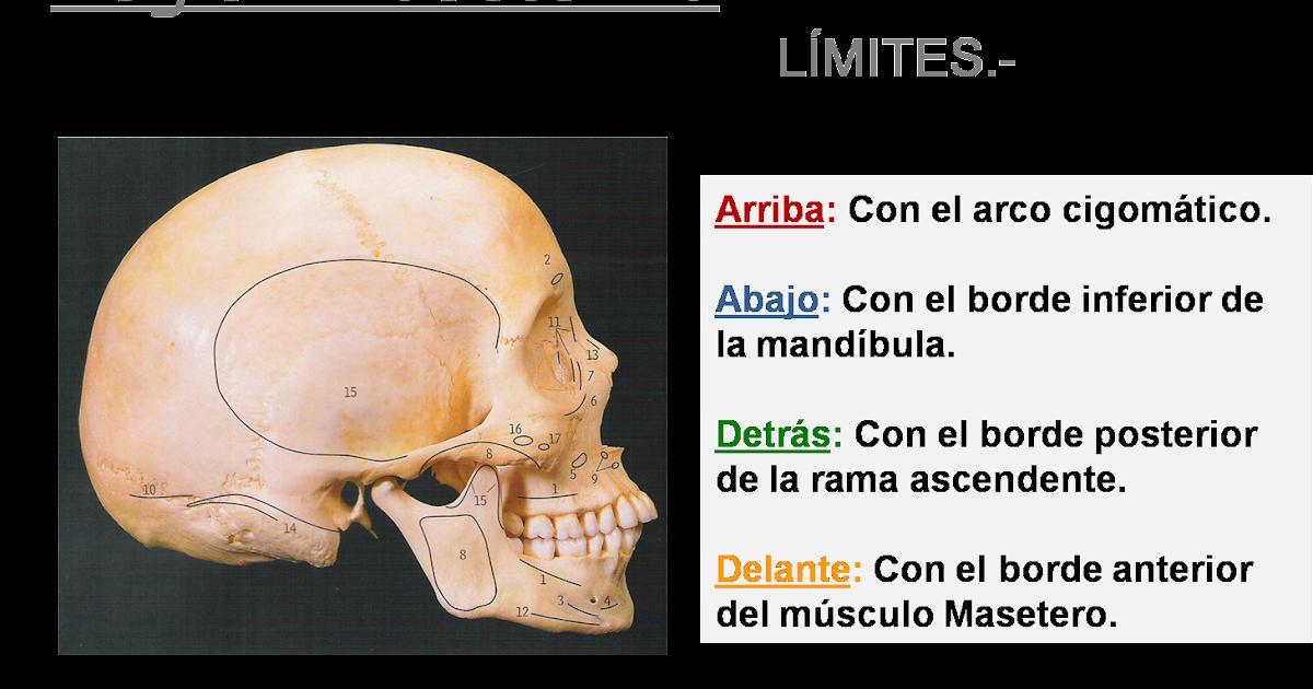 novadens.- Servicios Odontológicos.: Región Maseterina.