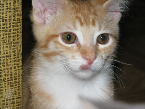 picture I Googled of a kitty with ringworm in the same location