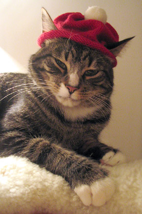 http://4.bp.blogspot.com/_NA_tPO4stXw/TLOoKLrn8NI/AAAAAAAAAK4/TAzNVTYPkdU/s1600/kitty_cat_hat.jpg