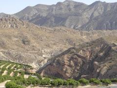 La Rambla Salá sufre un ataque brutal. El ecosistema peligra.