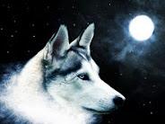 """""""O homem é lobo do homem""""(Thomas Hobbes)"""