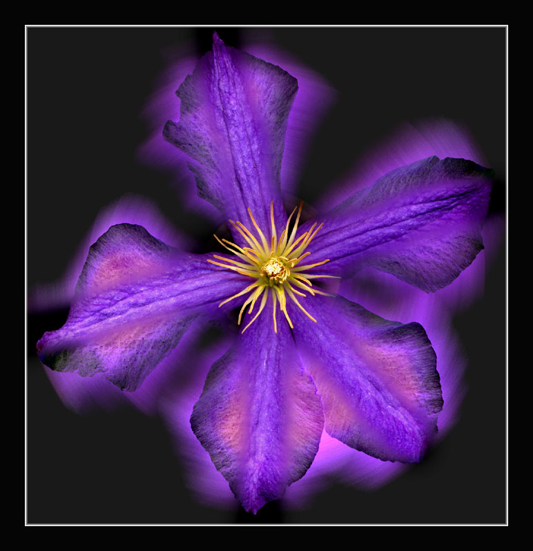 today's honoree is.......... Flower-purple-mix-small