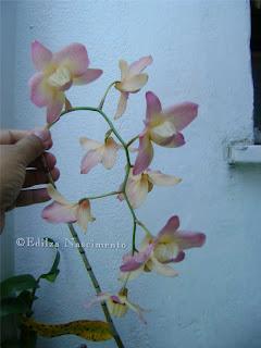 Jardim-orquideas
