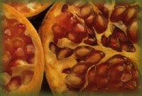 fruto da romanzeira