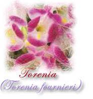 torenia