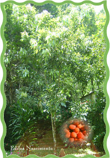Jardim-Litchi Chinensis