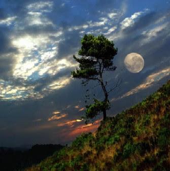 Lua 7