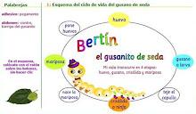 BERTÍN, O VERME DE SEDA