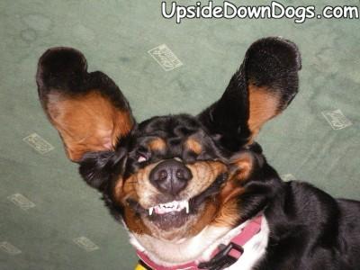 [Image: upsidedowndog2.jpg]