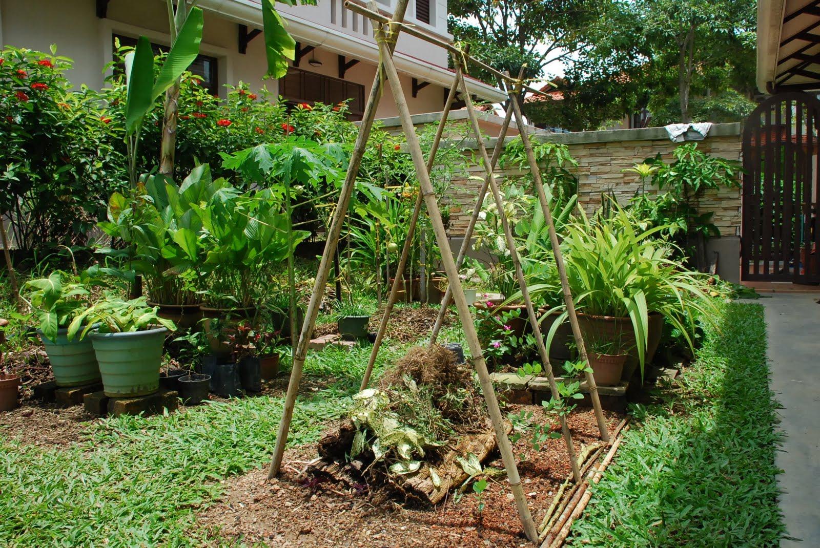 My Little Vegetable Garden An Overview Of The Garden
