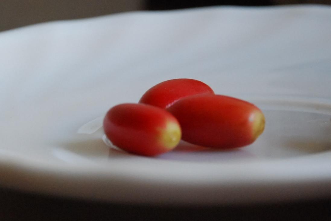 Miracle berry or pokok ajaib: synsepalum dulcificum