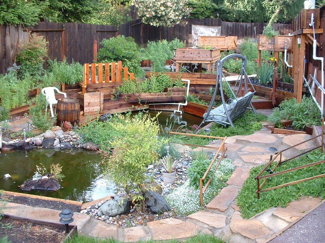 Swimming pool to natural pond for Koi pond pool