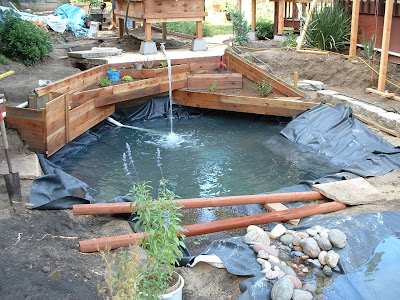 Swimming pool to natural pond temporary circulation for Temporary koi pond