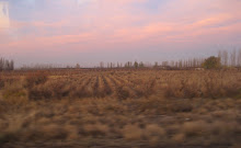 Mendoza Sunrise