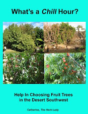What's A Chill Hour? Help In Choosing Fruit Trees in The Desert Southwest
