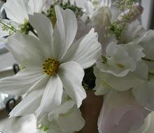 rosenskära och luktärt