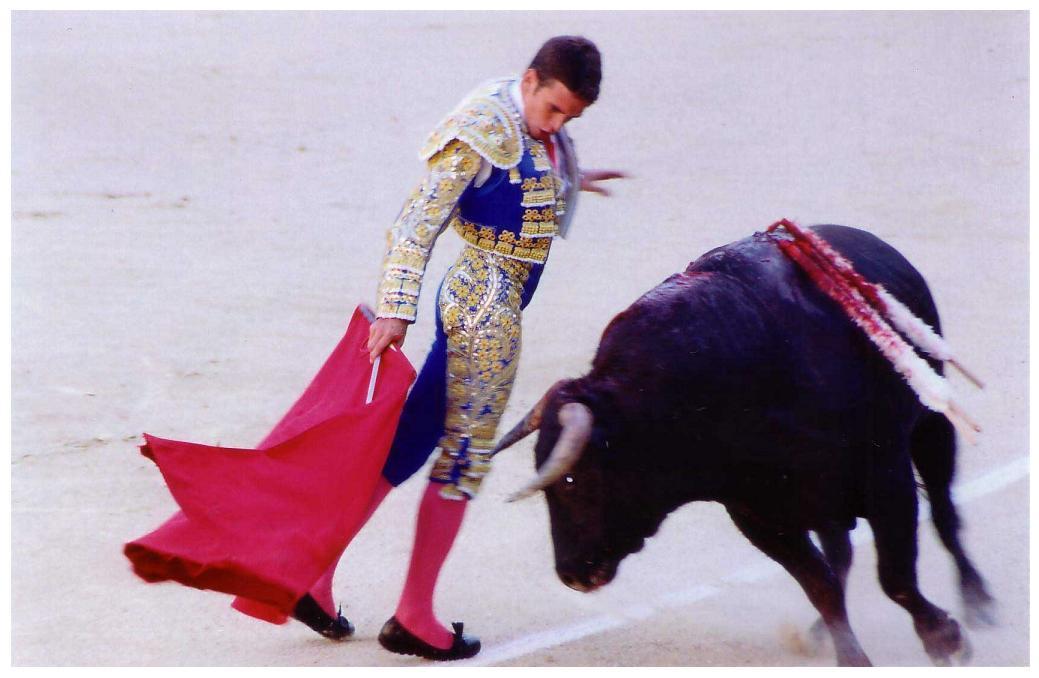 banteng dan matador