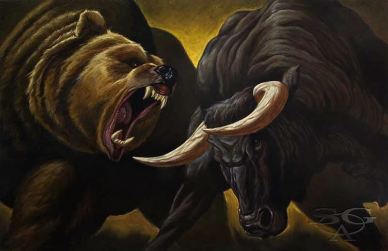 Image result for bear attacks bull